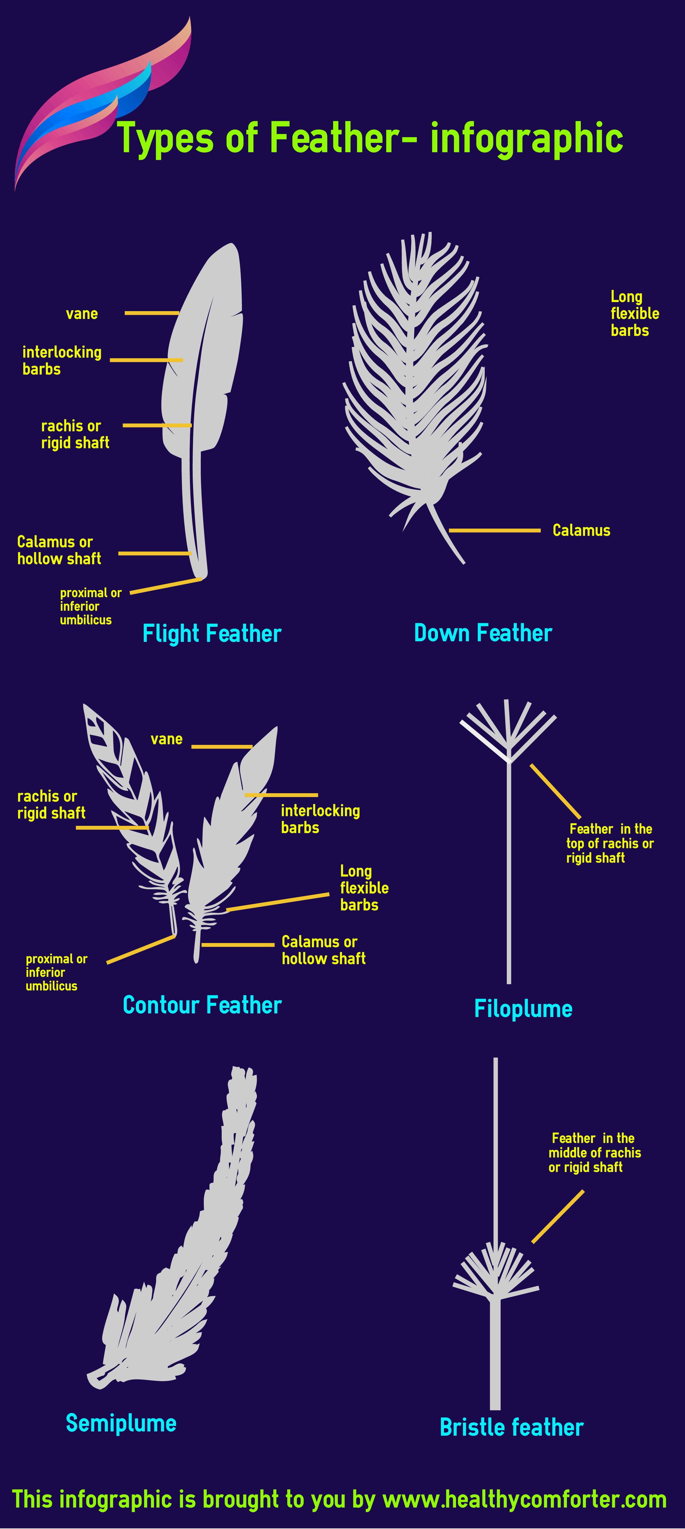 Types of feather