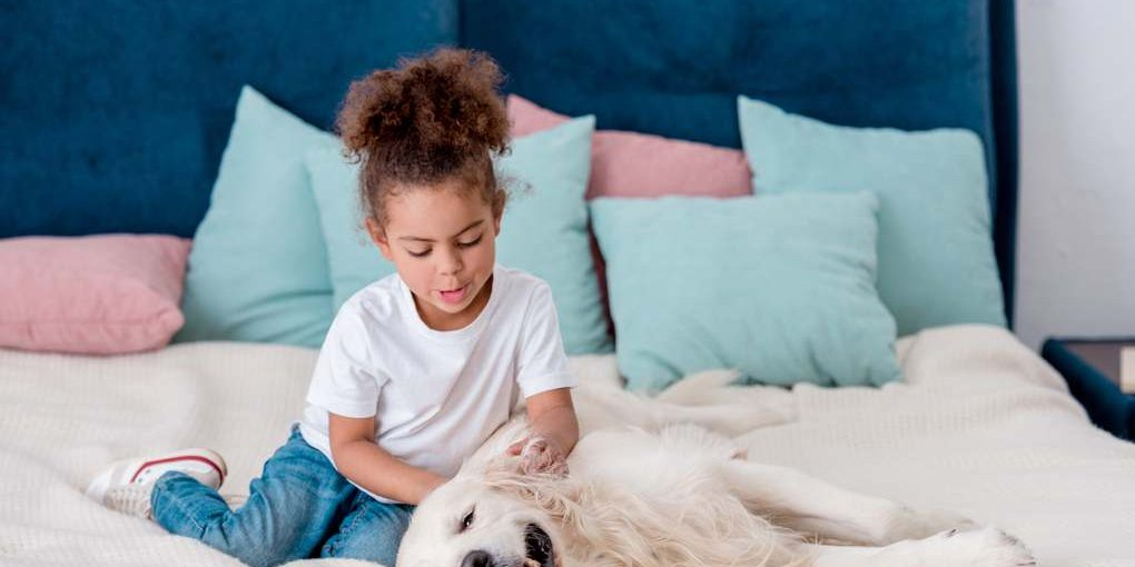 Best sheets for Dog Hair