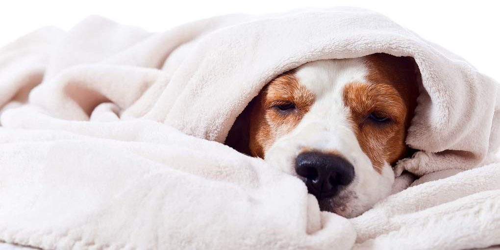 best blanket for dog hair
